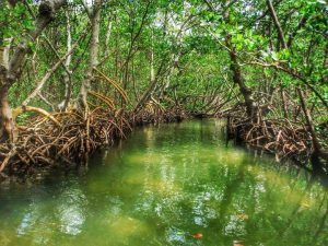 Ted Sperling Park Mangrove Tunnels